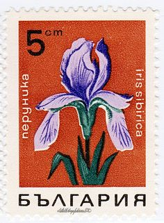 Bulgaria.  FLOWERS.  IRIS.  Scott 1667.  A699, Issued 1968 Apr 25,  5. /ldb.