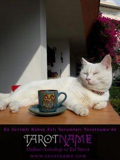 En sevimli #kahve yorumları, uzman gerçek yorumcularla online kahve falı http://www.tarotname.com  'da #kahvefali #fal #cats #onlinefal #kedi i #cute #кот #kedi #katze #catstagram #onlinetarotfalı #catstagram #kediler #cats #kitty # #instacat #猫 #happy #cutecat #goodmorning #tarotoftheday #tarotonline ,#katina #astroloji,#kedi,#tarot #tarotname