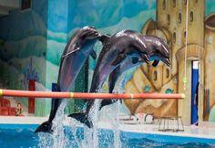 Dubai Dolphinarium, elke dag shows en een meet en Greet met dolfijnen super gaaf! Of je kijkt een van de zeehonden shows en meet en greten met zeehonden en als je liever naar een papegaaien show