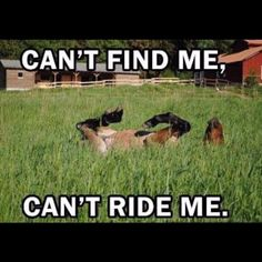 20 of the Funniest Horse Memes - Horses Funny - Funny Horse Meme - - Funny horse playing hide and seek in the grass The post 20 of the Funniest Horse Memes appeared first on Gag Dad. Funny Horse Memes, Funny Horse Pictures, Funny Animal Jokes, Funny Horses, Cute Horses, Pretty Horses, Cute Funny Animals, Animal Memes, Cute Baby Animals