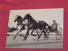 Rosalind (Queen of the Trotters) & Greyhound (King of the Trotters) at the team pole driven by Sep Palin. They trotted a mile in the current world record Thoroughbred, Standardbred Horse, American Pharoah, Harness Racing, Horse Training, Courses, Dressage, Race Horses, Equestrian