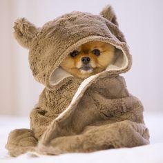 Que frio mamãe!