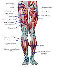 Les muscles des jambes - fiche santé du décathlon