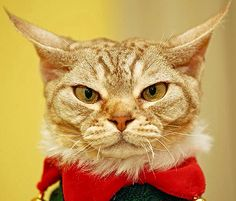13 Cats and Dogs in Ugly Christmas Sweaters Angry Animals, Like Animals, Funny Animals, Christmas Animals, Christmas Cats, Ugly Christmas Sweater, Merry Christmas, Funny Cat Memes, Funny Cats