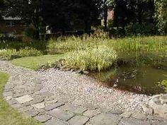 1000 images about ponds on pinterest pond plants for Garden pond depth