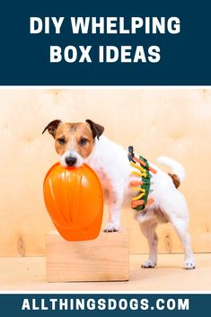 What is a Whelping Box? So your dog is around 7 weeks into pregnancy; Dog Whelping Box, Guide Words, Terrier Breeds, Diy Box, Dog Care, Easy Diy, Recycling, Plastic, How To Plan