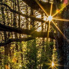 Late in the Day - Lake Elmo Regional Park  Lake Elmo MN  #school3y #mn #minnesota #photography #igers #usa #instagood #art #follow #photographyislife #lds #mormon #ldsphotographer #canon #ldsart #photo #photos #pic #pics #picture #photographer #pictures #snapshot #beautiful #instagood  #photooftheday #photodaily  #photooftheday #lakeelmo