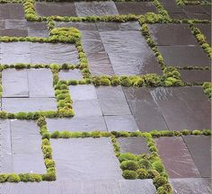  P   Slate + Moss. A perfect fix for those separating patio stone.