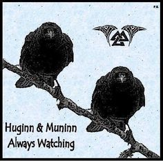Huginn and Muninn are a pair of ravens that fly all over the world, Midgard, and bring information to the god Odin.