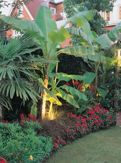 Bowles and Wyer, planting, tropical, night shot, lighting