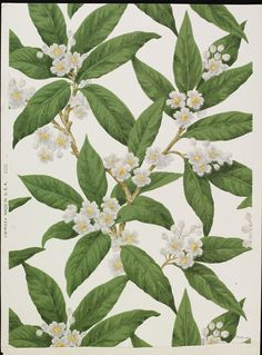 Wallpaper | M. H. Birge & Sons Co. | V&A Search the Collections