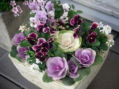 冬の花ガーデニング☆初めてさんが育てる7つの花々 - 花咲マニアとアロマさん