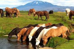 Reiterferien auf Island - Reiterreisen und Reittouren auf Island