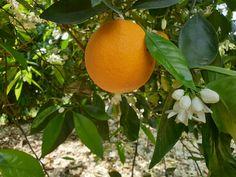 están bien las naranjas en ceto