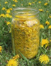 Dandelion WINE- SIMMER 10 min. In 1 Gal Water,3 quarts flower heads.  DISSOLVE 5c sugar, & zest/juice of 1 lemon & 2 oranges. Leave overnight.  STRAIN.  ADD 1 tsp. yeast nutrient, 1 pk yeast, 1 lb. golden raisins. FIT AIRLOCK & leave till bubbles stop. RACK. AGE.