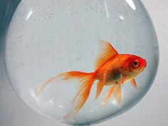 Goldfish Bowl Photograph  - Goldfish Bowl Fine Art Print