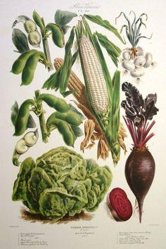 Garden Design Plans, Flower Garden Design, Garden Illustration, Antique Illustration, Vegetable Prints, Garden Seeds, Antique Prints, Quote Prints, Garden Paths