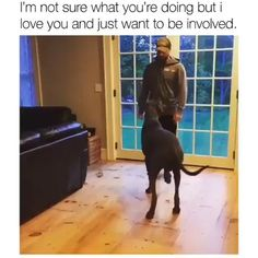 Funny Animal Jokes, Funny Dog Memes, Funny Dog Videos, Funny Animal Pictures, Animal Memes, Dog Funnies, Funny Riddles, Animal Humor, Cute Funny Dogs