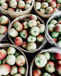 Amy Carroll (Photographer): Apples