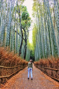 Solo hiking in Japan: a four day Kumano Kodo itinerary, advice on hiking / solo hiking the Kumano Kodo, how to book accommodation, information on the history and culture of the Kumano Kodo, Japan travel advice Places In Melbourne, Kyoto Itinerary, Nijo Castle, Beautiful Places In Japan, Solo Travel Tips, Travel Goals, Backpacking Asia, Best Hikes, Melbourne Australia