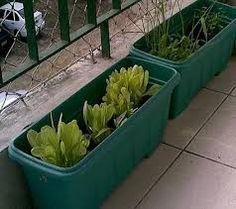 Resultado de imagem para horta em casa como começar