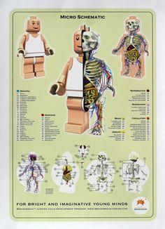 Realistic Anatomies of Cartoon Characters | JamesGunn.com - Official Website for James Gunn