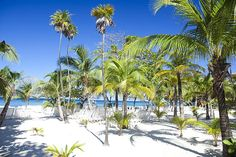 Roatan Bay Islands, Honduras   Tabyana Beach In Roatan