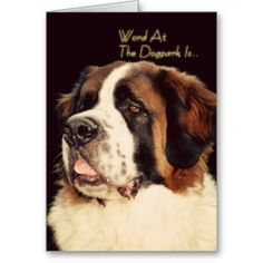 >>>This Deals          Saint Bernard Birthday Cards           Saint Bernard Birthday Cards online after you search a lot for where to buyShopping          Saint Bernard Birthday Cards Review on the This website by click the button below...Cleck See More >>> http://www.zazzle.com/saint_bernard_birthday_cards-137439066554745547?rf=238627982471231924&zbar=1&tc=terrest