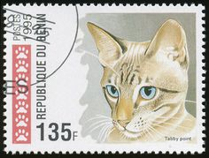 Republic of Benin 1995 Cat Stamps - Tabby Point