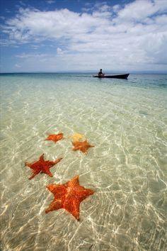 Starfish on the beach at Bocas del Toro, Panama