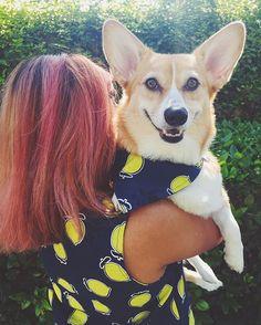What do you do when you have leftover fabric after making a shirt? You make your dog a matching bandana, DUH. 🍋 (Note the drool.)gatsbyandscoutcorgisscoutthecorgi,corgi,grainlinestudio,willowtank,dogsofinstagram