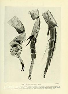 v. 1 - Marvels of the universe, - Biodiversity Heritage Library