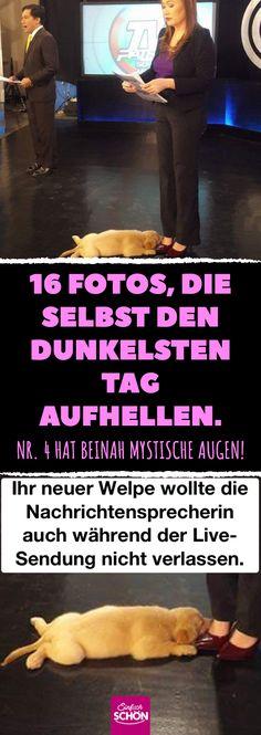 16 Fotos, die selbst den dunkelsten Tag aufhellen. Nr. 4 hat beinah mystische Augen! #emotionales #aufmunterung #liste #freude #glück Tier Fotos, Humor, Funny Pictures, Funny Pics, Haha, Cool Stuff, Sweet, News Anchor, New Puppy