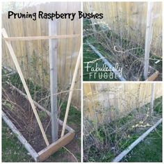 Tips & Tidbits for your Garden is: Cleaning out your Garden Area and Pruning Raspberry bushes
