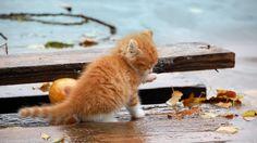 Cute kittens laptop wallpapers 1366x768 (15)