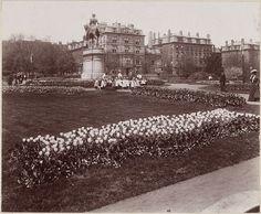 Tulip display in Boston Public Garden, Boston, Mass. 1906