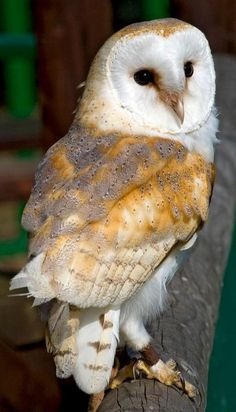 Very Beautiful Owl..........