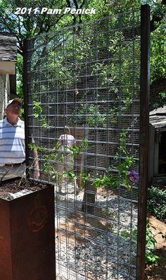 contemporary trellis screen made of humble ranch materials: a fine, wire screen sandwiched between two sections of sturdy cattle panel, and attached to square steel posts