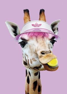 Tennis Giraffe Poster in the group Posters & Prints / Insects & animals at Desenio AB Tier Wallpaper, Animal Wallpaper, Wallpaper Iphone Cute, Cute Wallpapers, Giraffe Art, Cute Giraffe, Giraffe Drawing, Giraffe Nursery, Animals And Pets