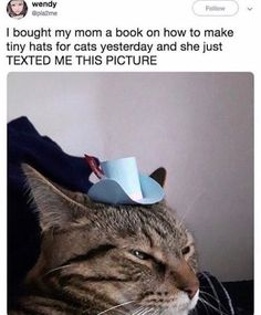 Cute Animal Memes, Cute Animal Pictures, Cute Funny Animals, Cute Cats, Funny Pictures, Funny Cat Memes, Funny Relatable Memes, Haha Funny, Funny Cute