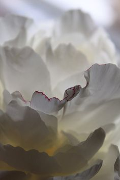 I love peonies, those petals! Love Flowers, White Flowers, Beautiful Flowers, Fotografia Macro, Colorful Roses, Foto Art, Textures Patterns, Planting Flowers, Art Photography