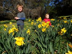 So much fun to be had playing amongst the Daffodils
