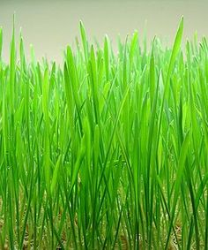 Consolidating data center benefits of wheatgrass