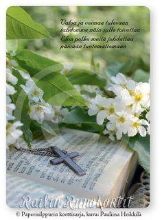 Kos, Herbs, Herb, Aries, Blackbird, Medicinal Plants