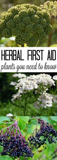 Herbal plants for first aid.