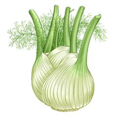 """All About Growing Fennel"" Fennel is both a vegetable and an herb, depending on which variety you grow. Growing crunchy bulb fennel (also called finocchio) is easy in spring and fall, or you can keep a feathery mound of perennial fennel as a steady source of fennel fronds. This guide includes descriptions of the types of fennel as well as tips for growing fennel in your garden. From MOTHER EARTH NEWS"