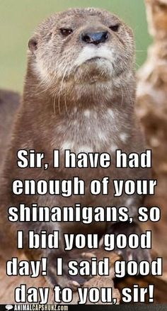 Funny Animal Captions - You Have Offended Me, Sir!