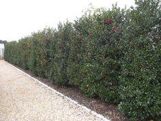 Instant Hedge - Garden Project   Garden Projects - Garden Design, Landscaping