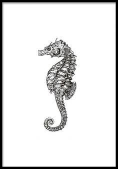 Seahorse, poster. Fin tavla med svartvit sjöhäst. Fin svartvit poster med illustration av en sjöhäst. Snyggt marint motiv med vintagekänsla.