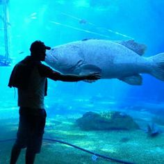 Ushaka Marine world, Durban Holidays And Events, Animal Crossing, South Africa, Oc, Country, Pets, World, Heart, Amazing